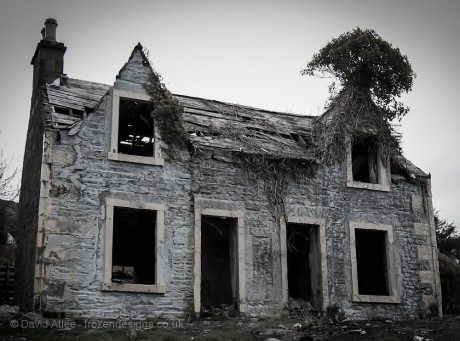 A derelict old house with a tree growing on the roof